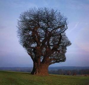Karar ağacı